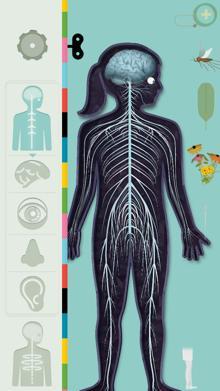 humanbody1