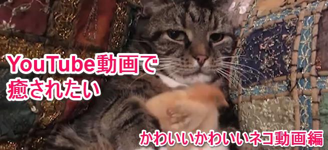 【至極の6連発】思わずニヤける「かわいいネコ動画」!笑って、萌えて、癒される!ニャンコたちの饗宴をご覧あれ